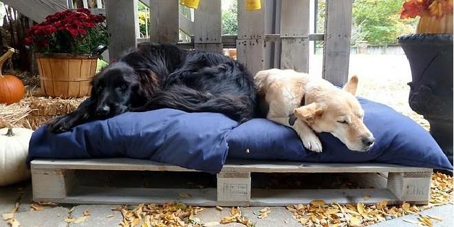 cama de perros hecha con palets